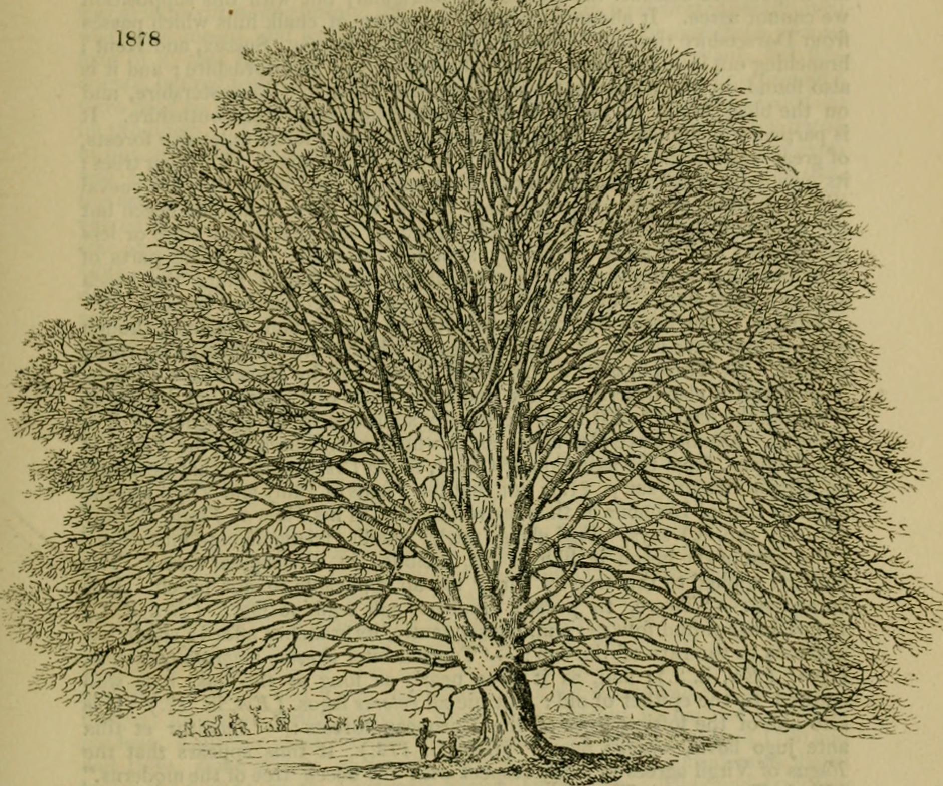 23 de Enero: Día de los Árboles Caídos