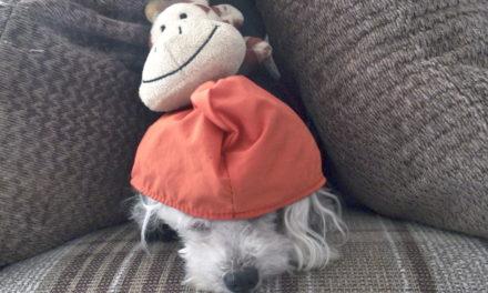 El pinche muñeco de la gorra naranja