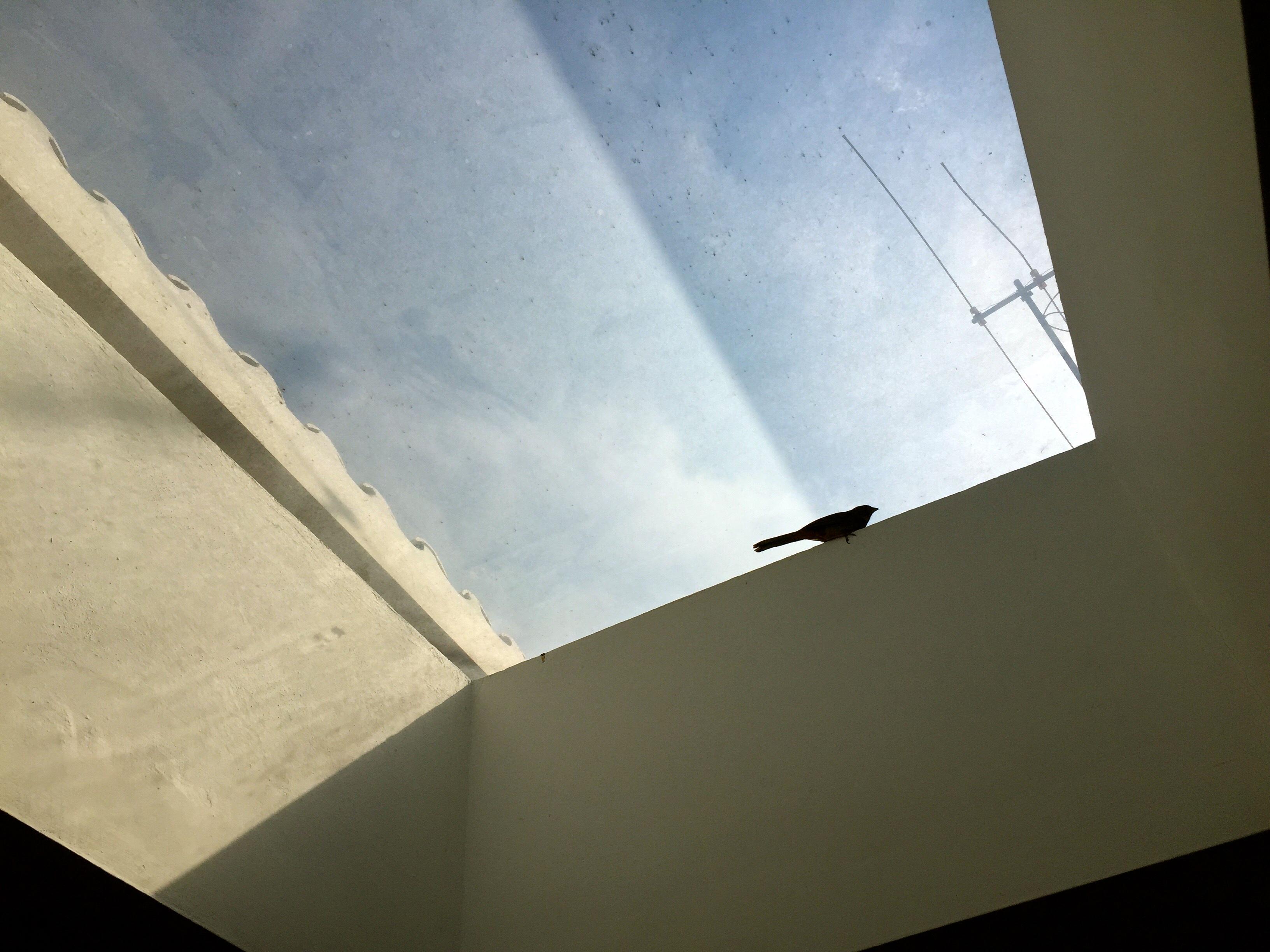 Dos pájaros atados al domo de mi casa